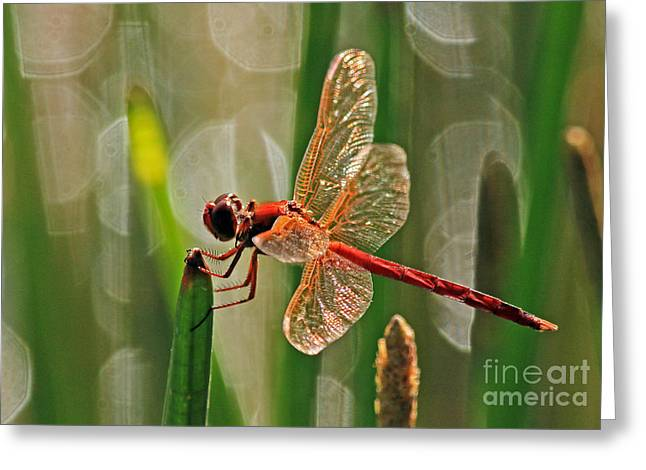 Dragonfly Profile Greeting Card
