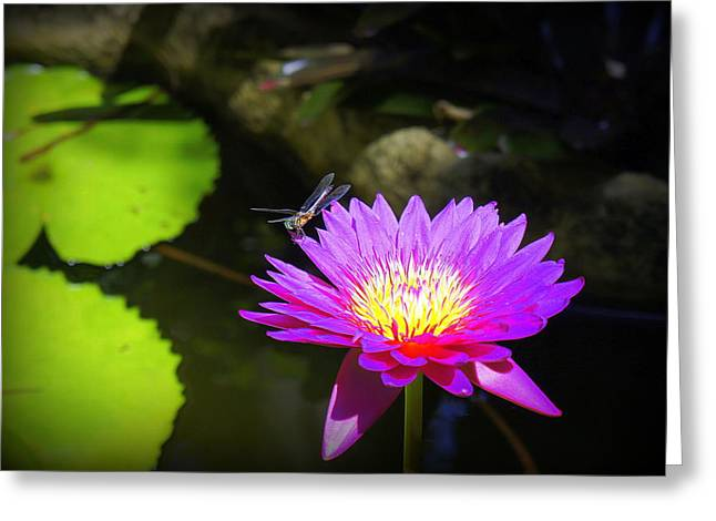 Greeting Card featuring the photograph Dragonfly Resting by Laurie Perry