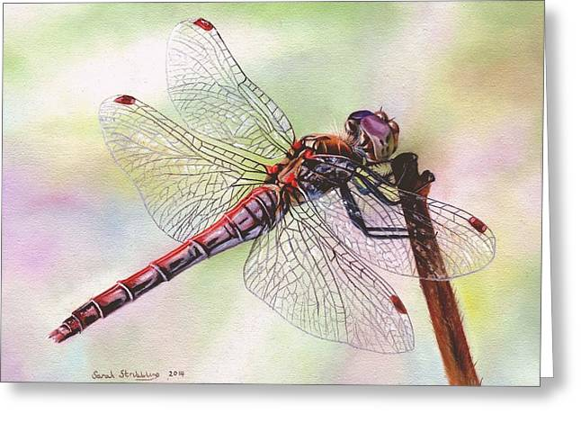 Dragonfly  Greeting Card by Sarah Stribbling
