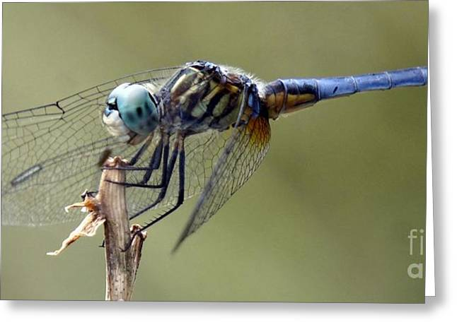 Dragonfly Smile Greeting Card by Lilliana Mendez