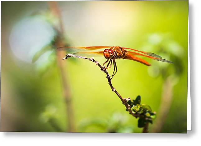 Greeting Card featuring the photograph Dragonfly Smile by Priya Ghose
