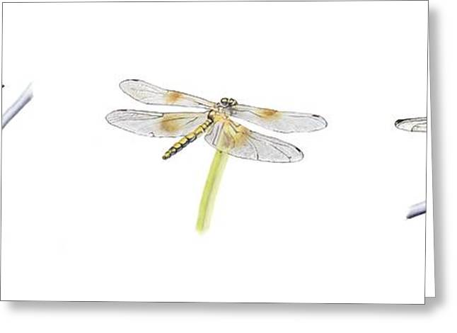 Dragonfly Trilogy Greeting Card
