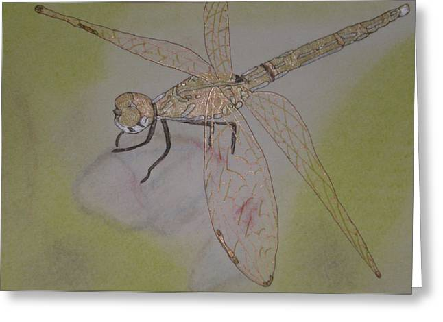 Dragonfly Visitor Greeting Card by Marcia Weller-Wenbert