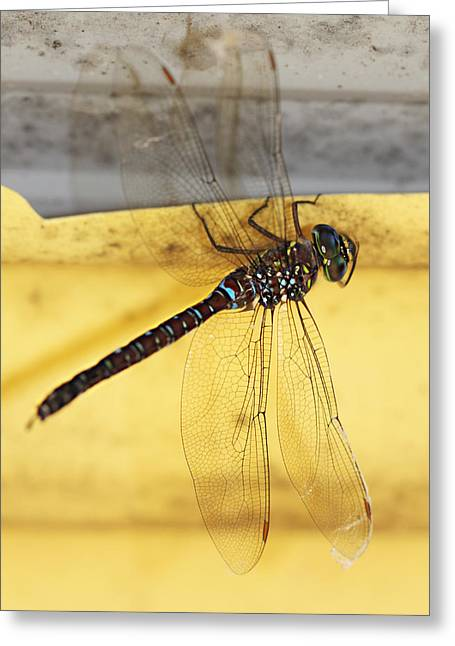 Greeting Card featuring the photograph Dragonfly Web by Melanie Lankford Photography