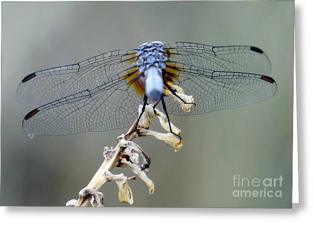 Dragonfly Wing Details II Greeting Card by Lilliana Mendez