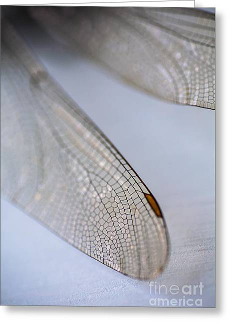 Dragonfly Wings 2 Greeting Card by Jan Bickerton