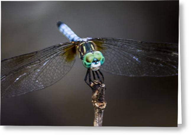Greeting Card featuring the photograph Dragonfly Wings by Paula Porterfield-Izzo