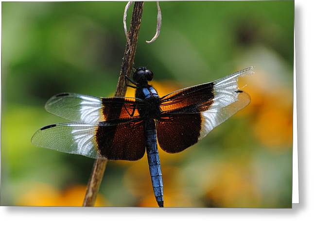 Greeting Card featuring the photograph Dragonfly Zoom by Robert  Moss
