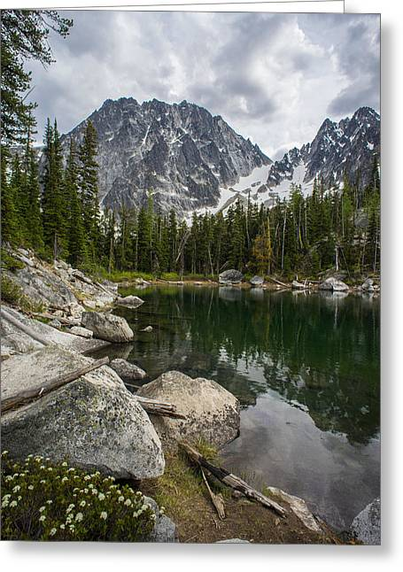Dragontail Forest Scene Greeting Card by Mike Reid