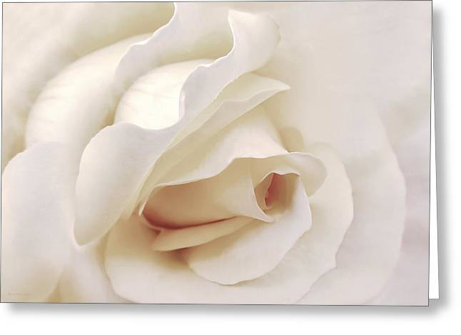 Dramatic Ivory Rose Flower Greeting Card by Jennie Marie Schell