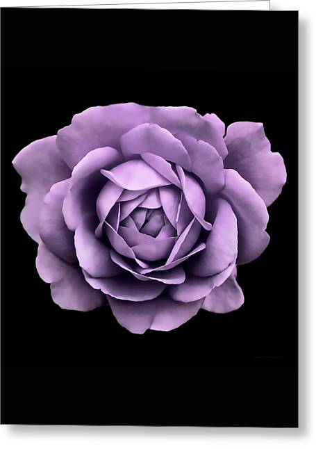 Dramatic Lavender Rose Portrait Greeting Card by Jennie Marie Schell