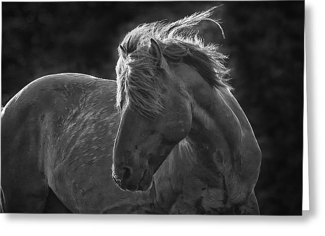 Dramatic Wild Mustang Greeting Card