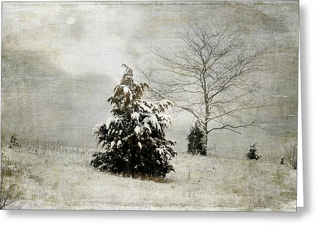 Dread Of Winter Greeting Card by Julie Palencia