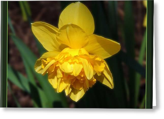 Dream Flower Greeting Card by Teresa Schomig