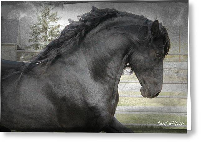 Dream Friesian Greeting Card