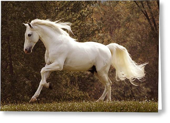 Dream Horse Greeting Card