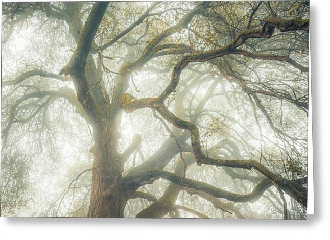 Dream Oak Greeting Card by Alexander Kunz