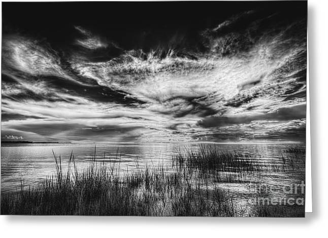 Dream Of Better Days-bw Greeting Card by Marvin Spates