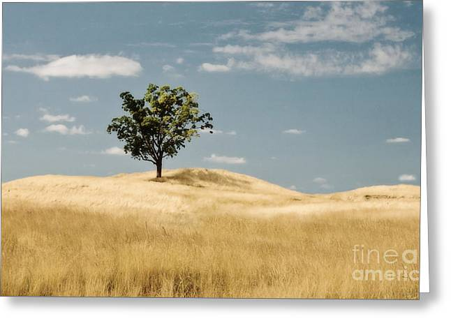 Dream Tree Greeting Card by Scott Pellegrin