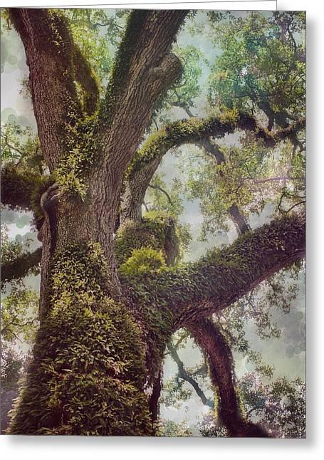 Dreamer's Oak Greeting Card