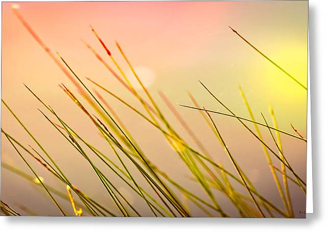 Dreaming In The Grass Greeting Card by Bob Orsillo