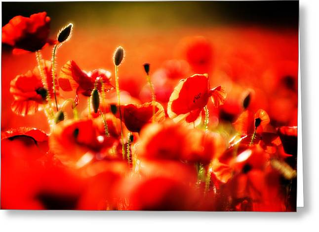 Greeting Card featuring the photograph Dreaming Of Poppies by Meirion Matthias