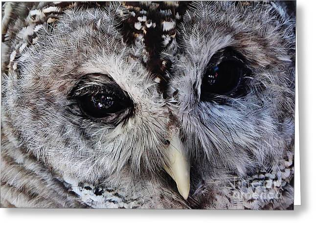 Dreaming Owl Greeting Card