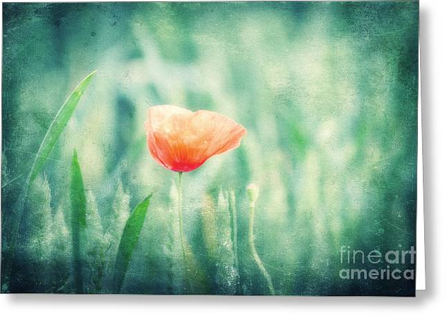 Dreaming Summer Greeting Card by Angela Doelling AD DESIGN Photo and PhotoArt