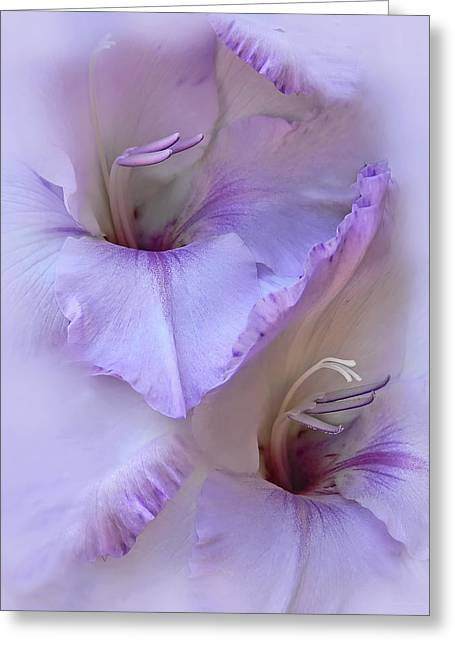 Dreams Of Purple Gladiola Flowers Greeting Card by Jennie Marie Schell