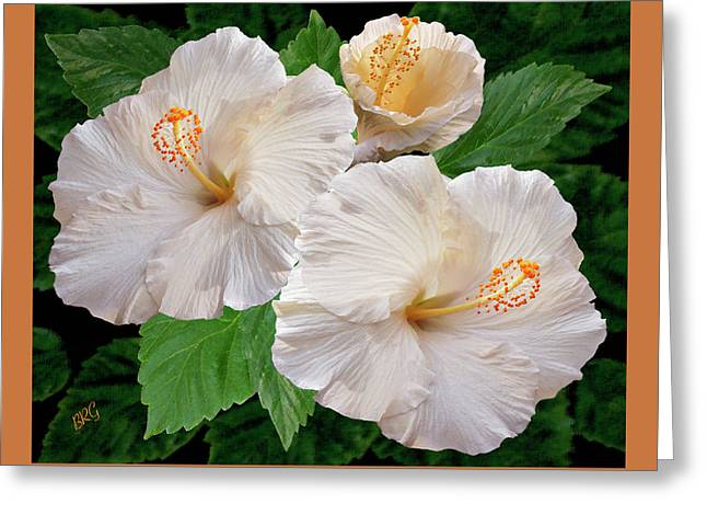 Dreamy Blooms - White Hibiscus Greeting Card by Ben and Raisa Gertsberg