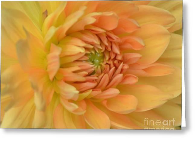 Dreamy Dahlia Greeting Card by Kathleen Struckle