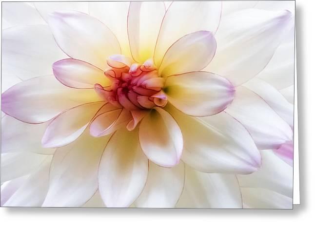 Dreamy Dahlia Greeting Card