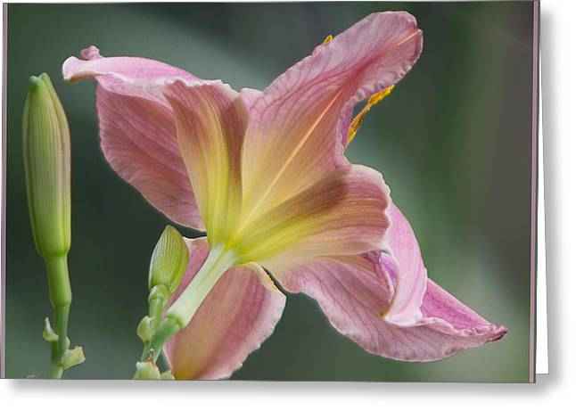 Greeting Card featuring the photograph Dreamy Daylily by Patti Deters