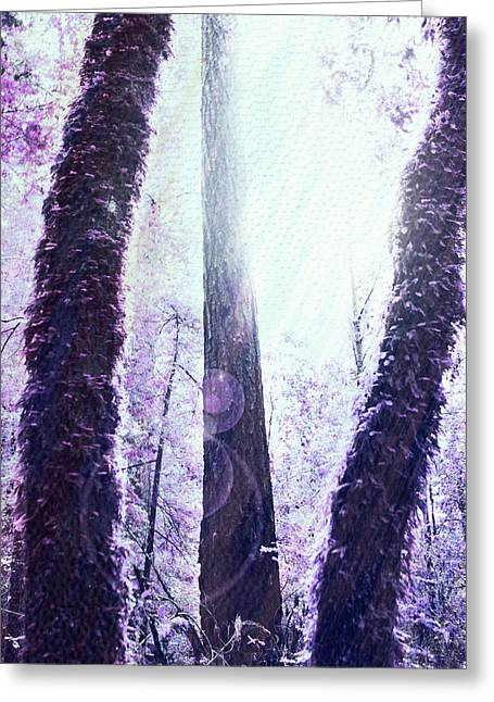 Dreamy Forest Greeting Card by Nicole Swanger