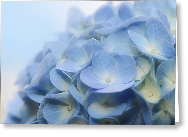 Dreamy Hydrangea Greeting Card by Lisa Knechtel