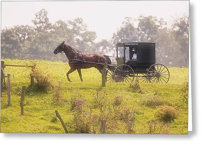 Dreamy Morning Greeting Card by Marcia Colelli