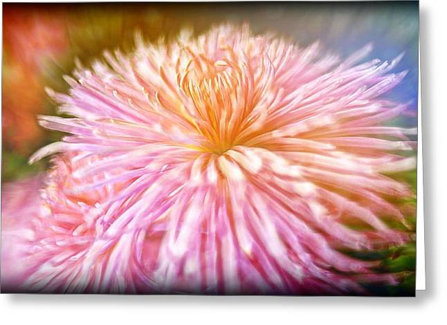 Dreamy Pink Chrysanthemum Greeting Card