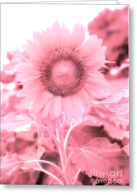 Dreamy Pink Cottage Chic Surreal Sunflower Greeting Card by Kathy Fornal