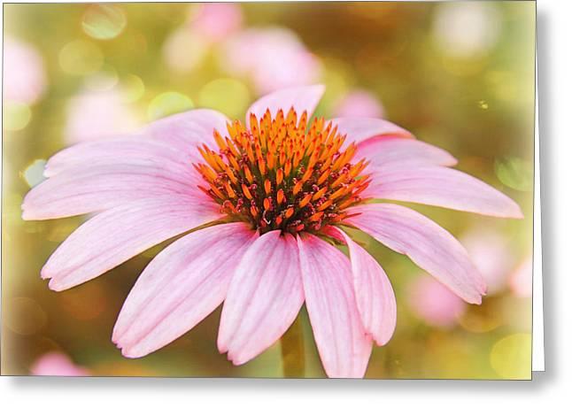 Dreamy Pink Flower Greeting Card by Elizabeth Budd