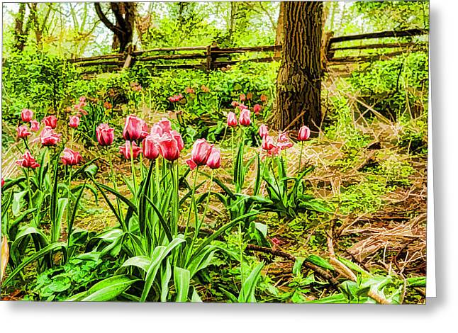 Dreamy Pink Tulip Garden - Impressions Of Spring Greeting Card
