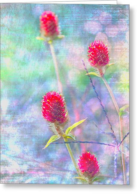 Dreamy Red Spiky Flowers Greeting Card by Karen Stephenson