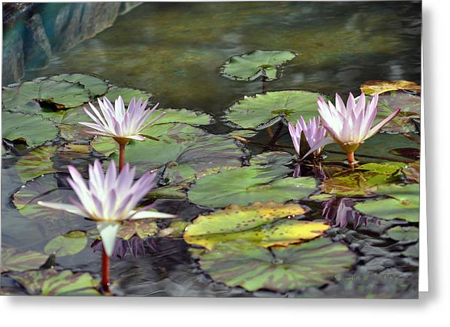 Dreamy  Water Lillies Greeting Card by Judith Russell-Tooth