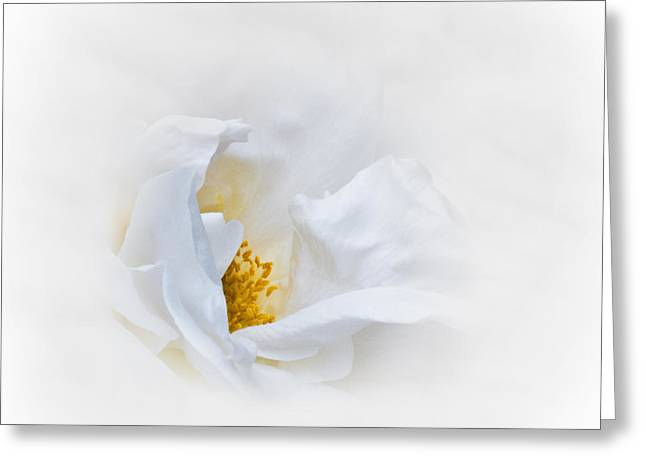 Dreamy White Rose Greeting Card by Jane McIlroy
