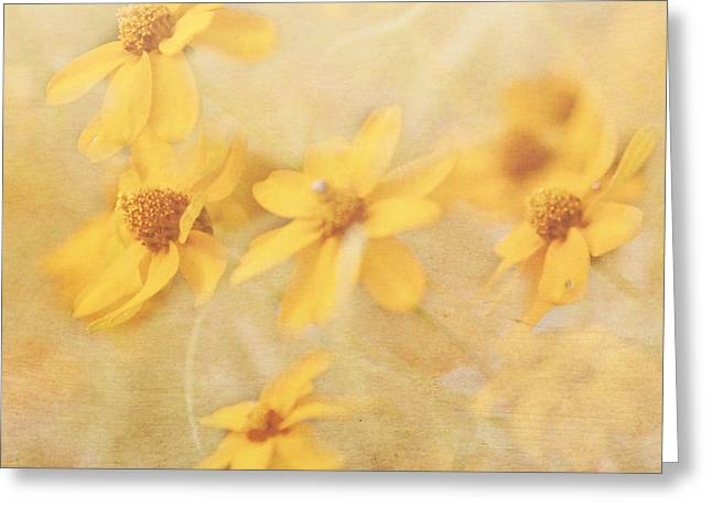 Dreamy Yellow Coreopsis Greeting Card