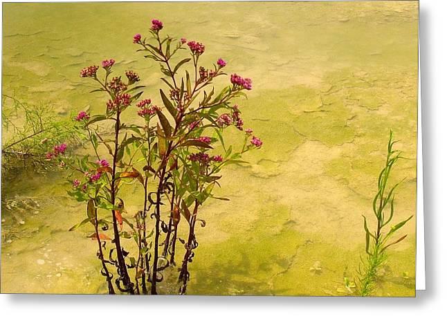 Dredge Basin Bouquet Greeting Card