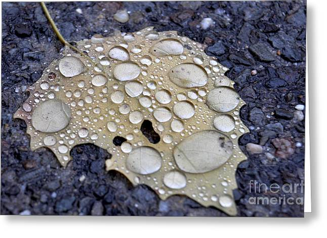 Drenched Leaf Greeting Card