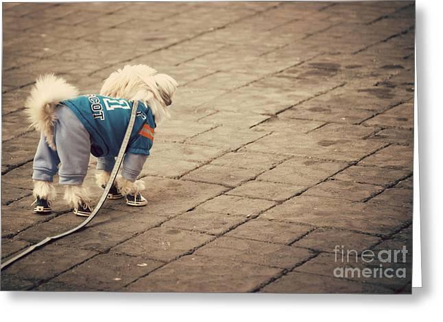 Dressed Up Dog Greeting Card by Juli Scalzi