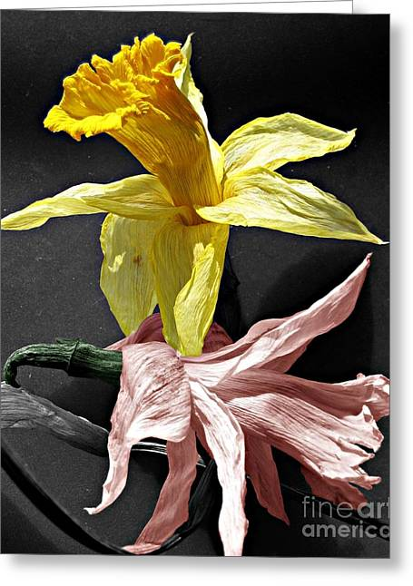 Greeting Card featuring the photograph Dried Daffodils by Nina Silver