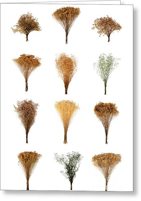Dried Flowers Collection Greeting Card
