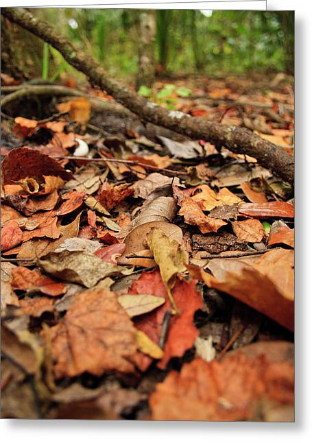 Dried Leaves On The Ground Greeting Card by � Marcela Montano - Vwpics